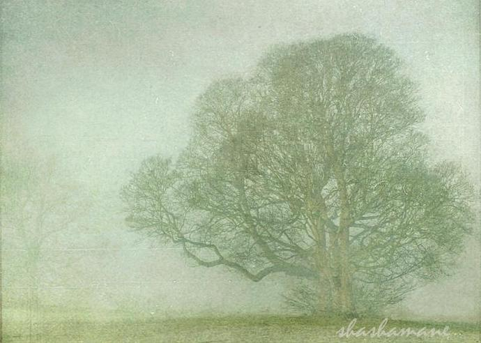 """Embraced by snow and mist - Fog and snow trees scene 5 x 7"""" fine art photography"""
