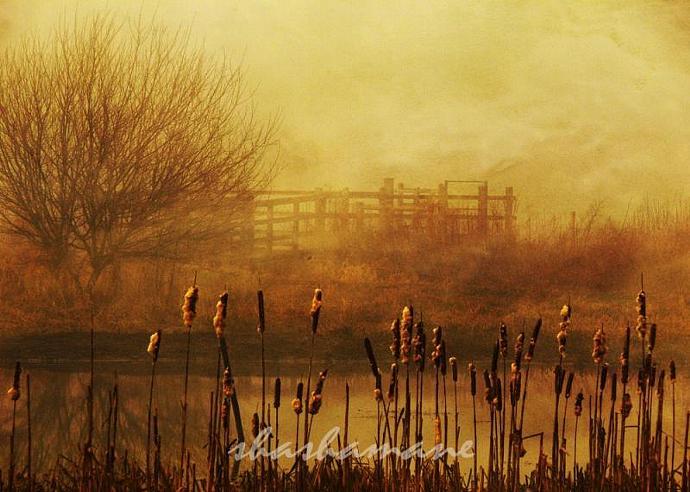 "We tried but we don't belong - Atmospheric winter, golden scene  8 x 10"" fine"