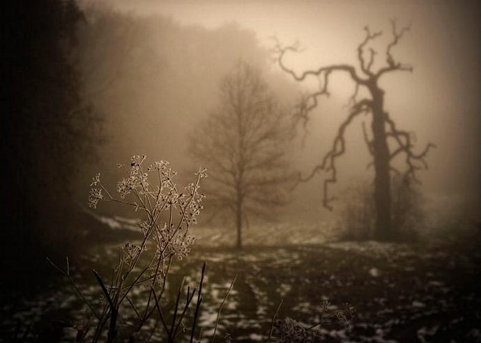 I feel the flow towards the low I have to go - Moody and haunting foggy scene