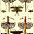 Grasshoppers and Dragonflies 2001 Albertus Seba's Cabinet of Natural Curiosities