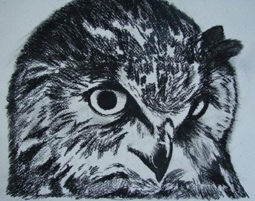 Scorned Owl-Original Charcoal Drawing