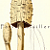 Lawyers Wig Mushroom 1884 Antique MC Cooke Engraved Victorian Botanical