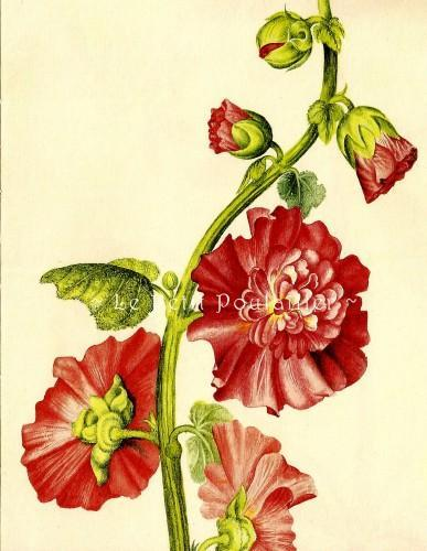 Florilegium Blossoms and Blooms 2000 Alexander Marshal Botanical Lithographs, Pl