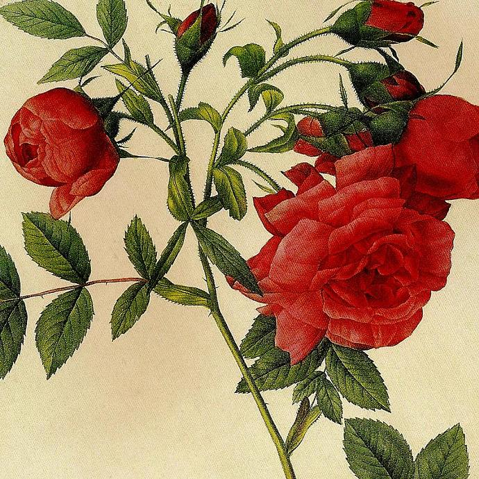 Sweet Briar Rose and the Rose of Love 1954 Vintage Pierre Redoute Botanical