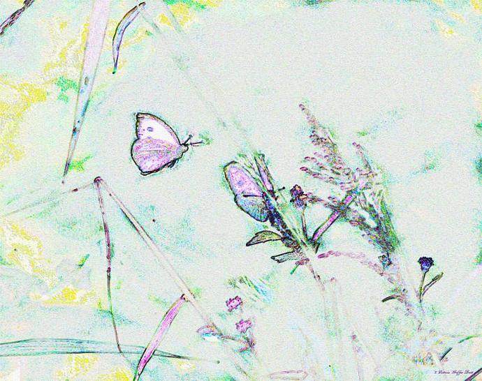 Two Butterflies- Digital painting