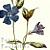 Lesser Periwinkle 1882 Victorian F Edward Hulme Botanical Wildflower Antique