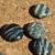 Zebra Jasper Beads 10-1285