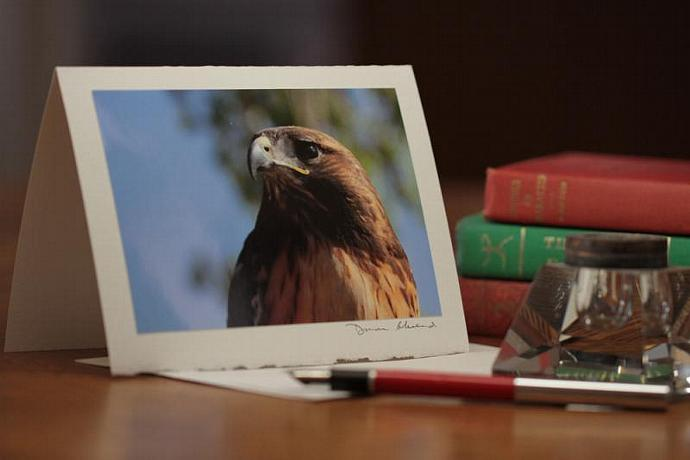 Photo Note Card - Red-tailed Hawk
