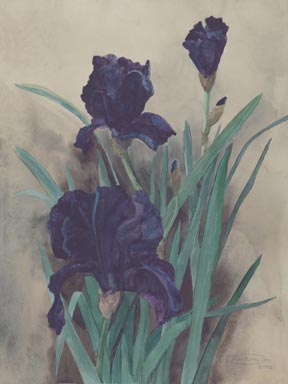 """Midnight"" Giclee Paper Print by Carol Thompson"