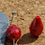 Red Velvet Quartz Teardrop Beads 10-1320