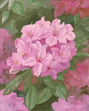 """Pink Rhododendron"" Giclee Paper Print by Carol Thompson"