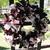 RAG Wreath--Scraggle Wreath--ON SALE- Wine Decor-HANDMADE COTTON Country