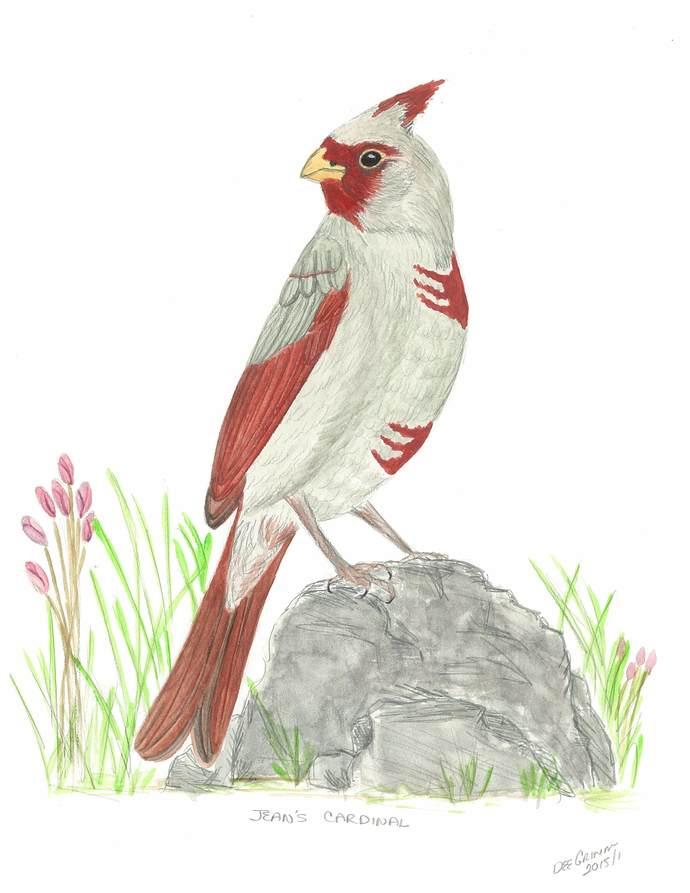 Jean's Cardinal