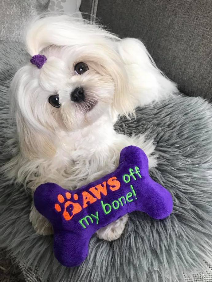 Paws Off My Bone-Squeaky Toy For SPOILED Dogs