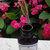 Flower Petal Face Serum | 1 oz | Carrot Seed Essential Oil | Sea Buckthorn |
