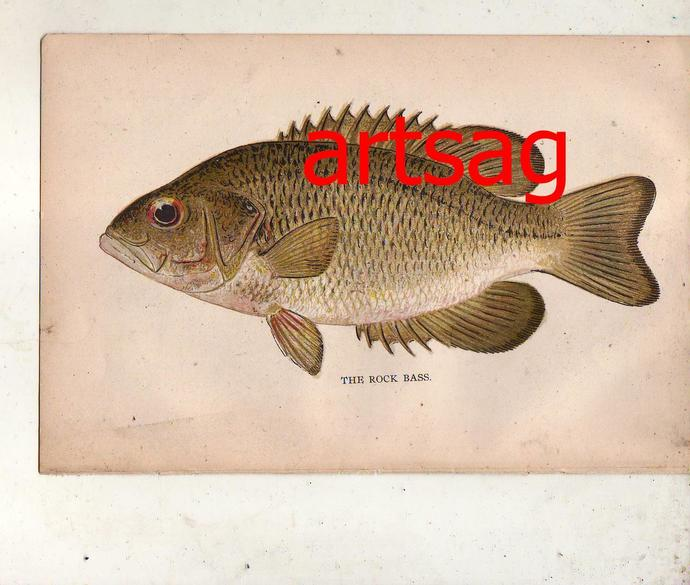 GREAT PRINTS OF FISH BY DENTON