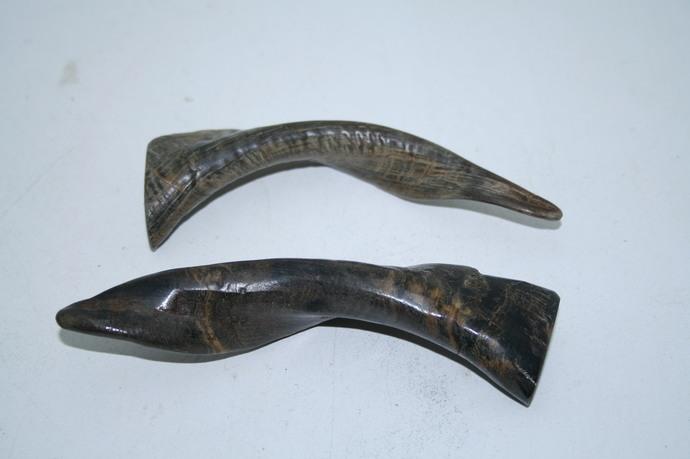 2 Goat horns .... v2a70 ... Polished goat horns.,.....