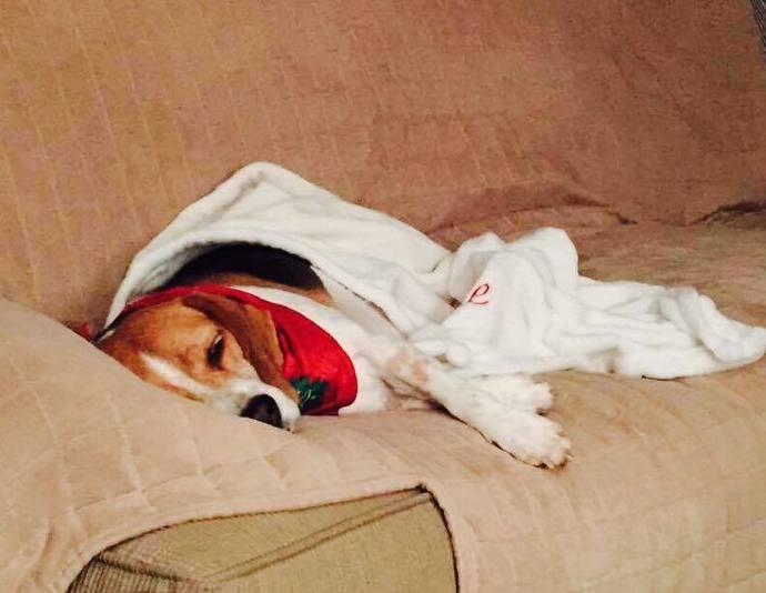Beagle On the Beach-Dog Blanket