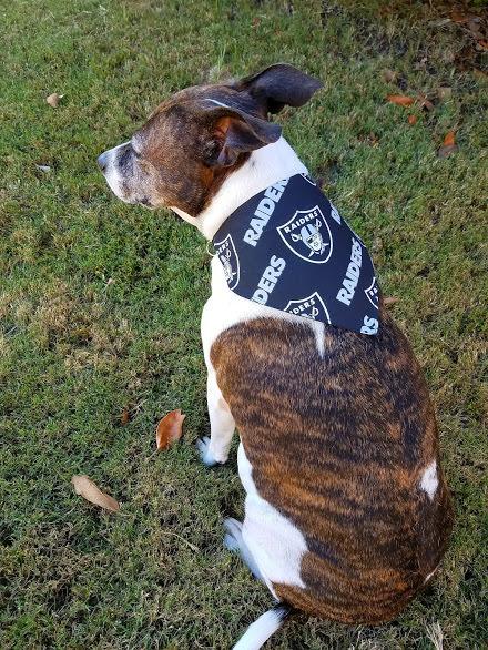 Oakland Raider's Dog Bandana, Raider's Dog Bandana, Oakland Raider's Sport's