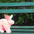 DIY Rabbit,Paper Rabbit model,3d rabbit,Hare,Jack Rabbit,Pink