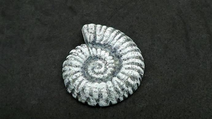 37mm Ammonite Nautilus Cabochon or Bead - Faux Gray Basalt Rock