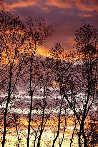 Layered Clouds with Trees Silhouetted by Setting sun