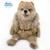 "Pomeranian Puppy, 17,7"" Knitted Pomeranian, Knitted Puppy, Puppy, Pomeranian,"