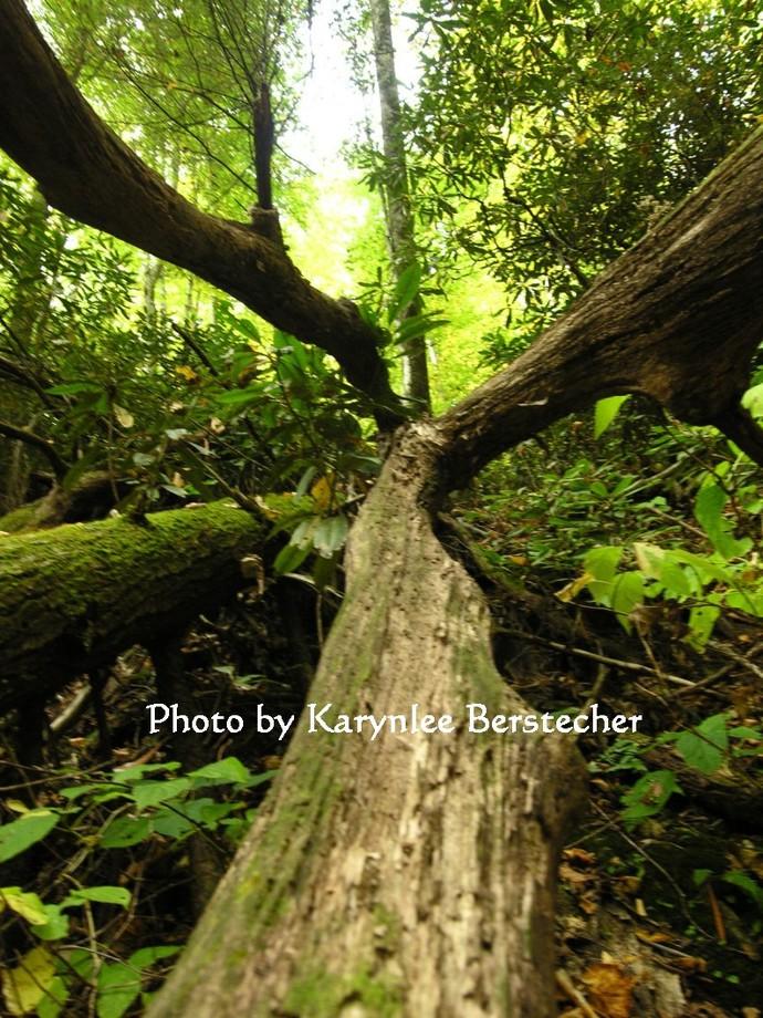 Convergence,  Matted Photography, Woodland Photography, Meditation Photography,