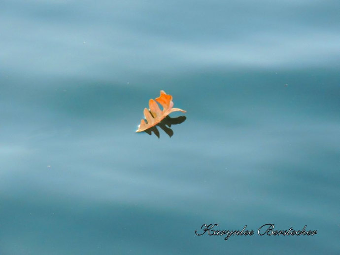 Fine Art Photography, Leaf Photography, Nature Photography, Minimalist Art,