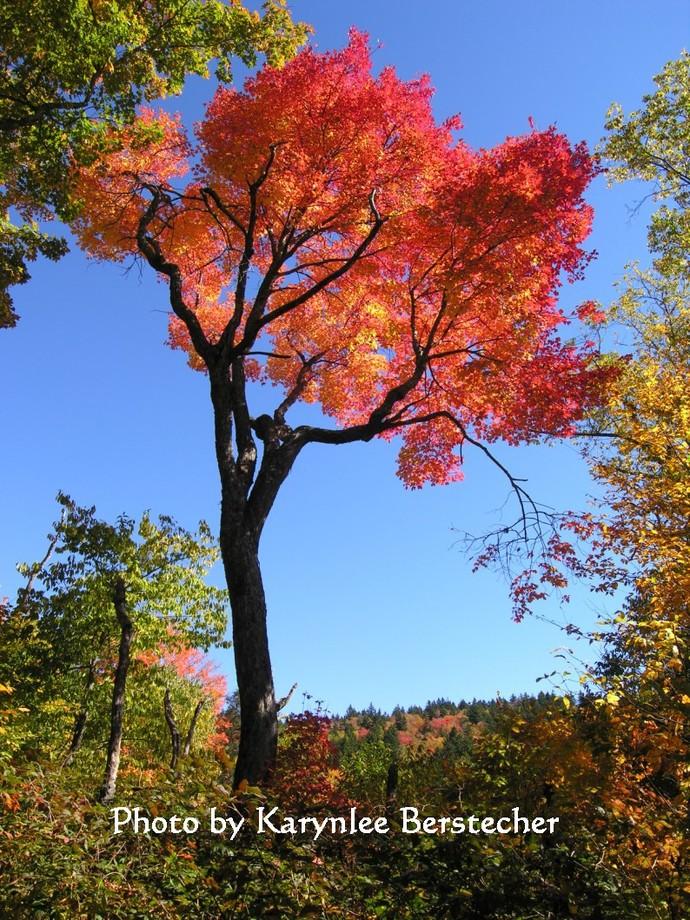 Autumn Joy, Nature Photography, Matted Fine Art Photography, Cabin Decor, Autumn
