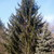 Evergreen Forest Air Spray, Room Freshening, Forest Clean Scent