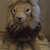 African Lion Amigurumi/Lion crochet Animal/Stuffed lion toy/Big Cats toy animal
