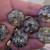 """6 x Steampunk 1"""" Inch Cabochons"""