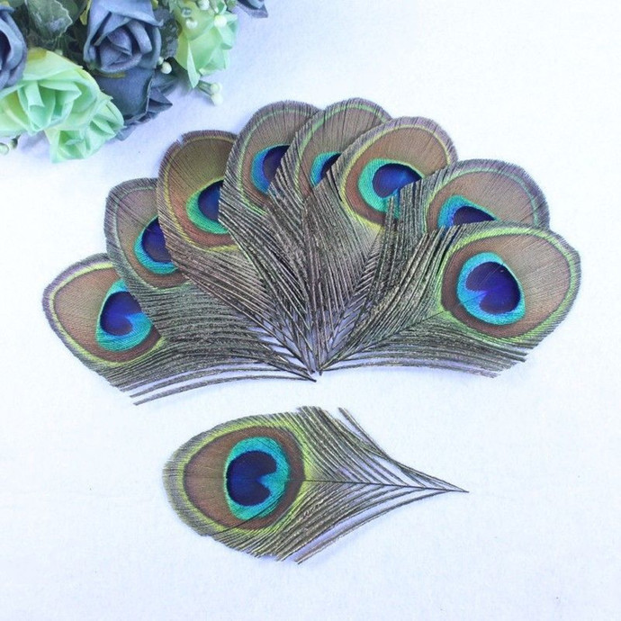 5 Natural Peacock Feather Trimmed