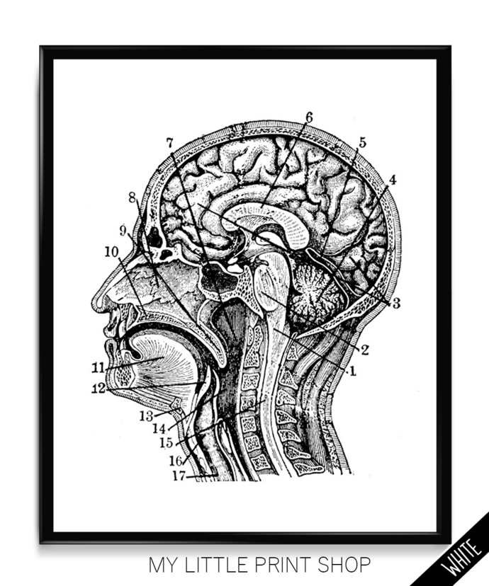 Vintage Brain Skull Anatomy