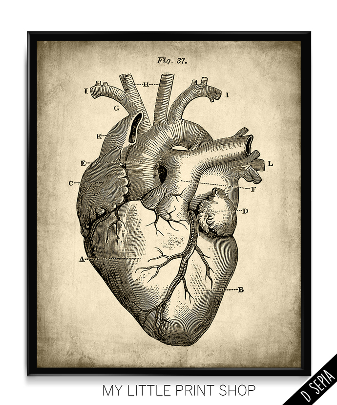 Vintage Heart Anatomy By My Little Print Shop On Zibbet