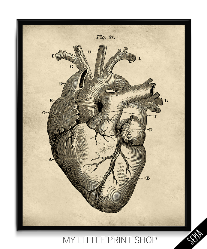 Vintage Heart Anatomy My Little Print Shop