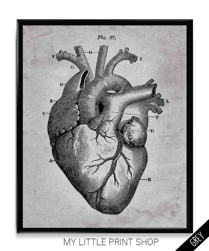 Vintage Heart Anatomy