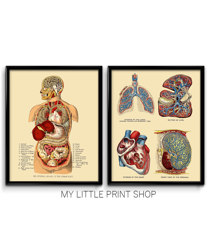 Vintage Internal Organs Anatomy