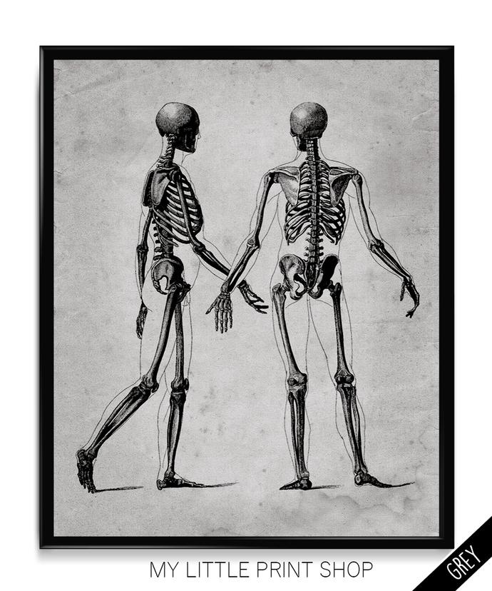 Vintage Skeletal Anatomy
