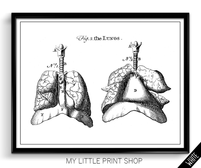 Vintage Lung Anatomy
