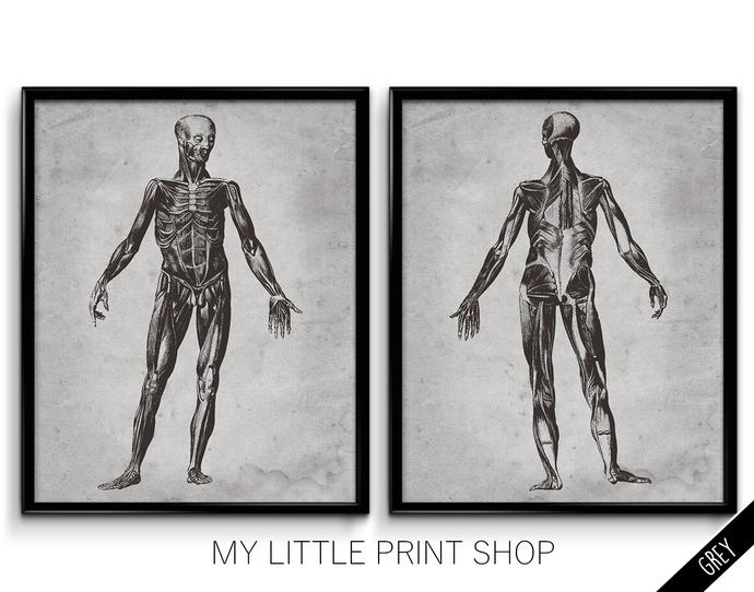 Vintage Muscle Anatomy Set