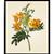 Vintage Yellow Flower