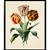 Vintage Tulip Flower