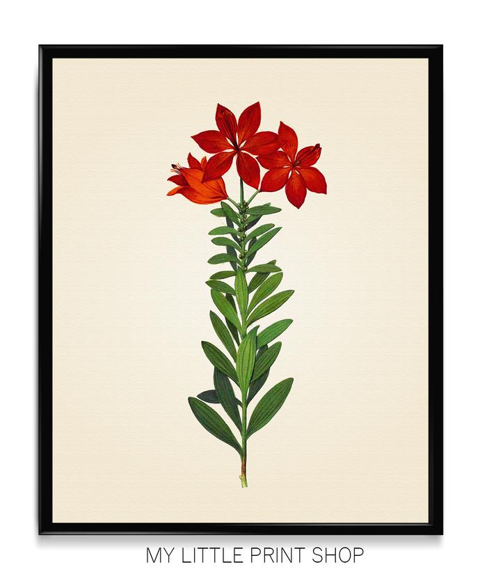 Vintage Red Flower