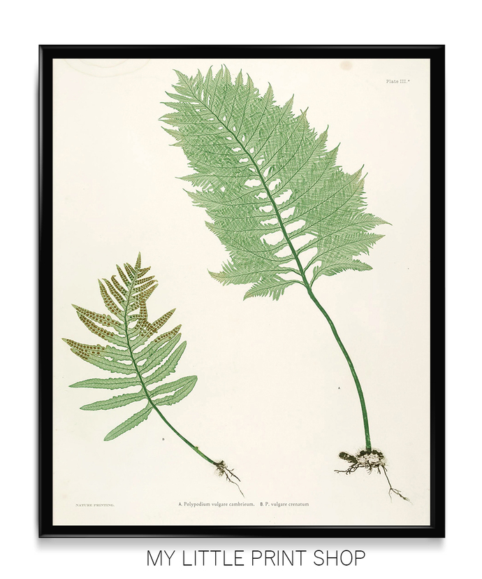 Vintage Botanical Fern Print Set