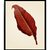 Vintage Botanical Red Leaf