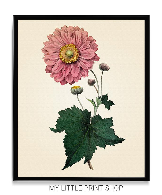 Vintage Pink Flower Botanical Print