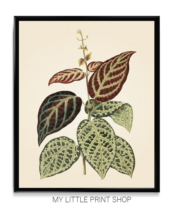 Vintage Botanical Green Leaf