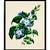 Vintage Blue Flower Botanical Print